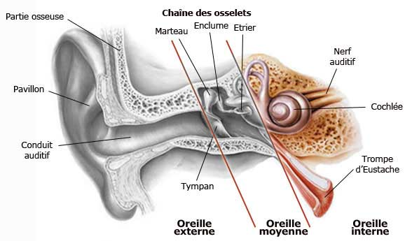 Oreille-interne