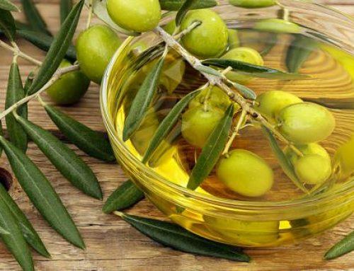 Terres Univia : une filière agricole oléagineuse pour manger « mieux gras »